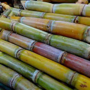 Aumenta el Cupo de Exportación de Azúcar Mexicana a Estados Unidos