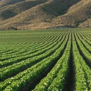 México Alcanza el Décimo Lugar de Exportaciones Alimenticias
