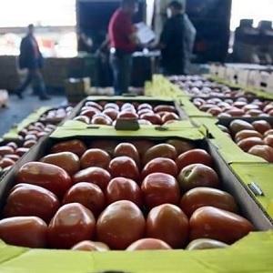 Estados Unidos Impone Aranceles a Exportaciones de Tomate Mexicano